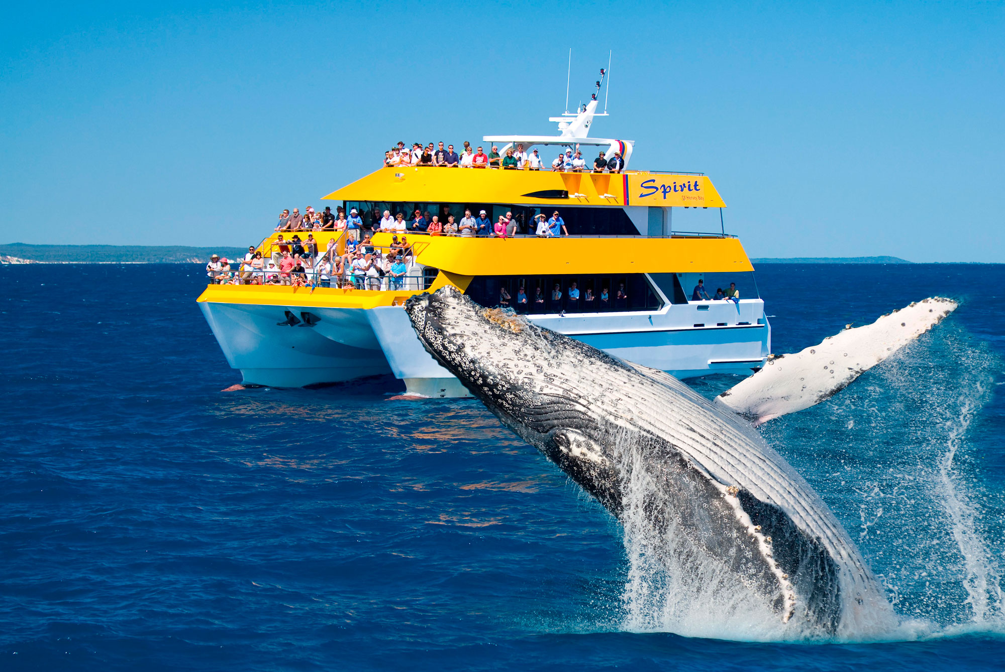 Half Day Whale Watching Tour Hervey Bay