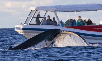 Eco Whale Watch Cruise