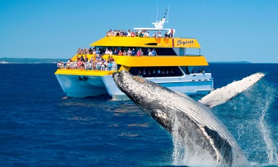 Half-day Whale Watch Cruise