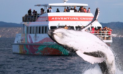 Kids Free Whale Watch