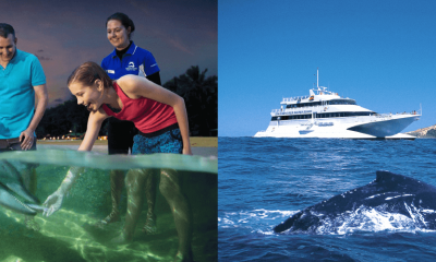 Dolphin Adventure Day Tour & Whale Watch Cruise