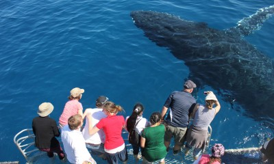 Premium Whale Watch tour