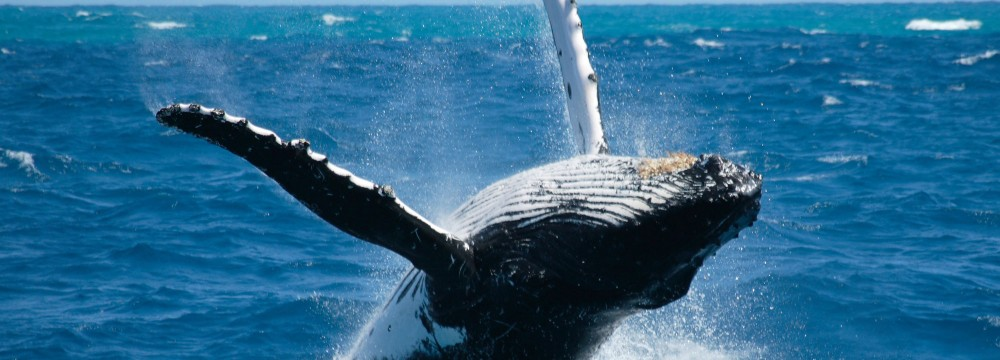 Queensland Whale Watching