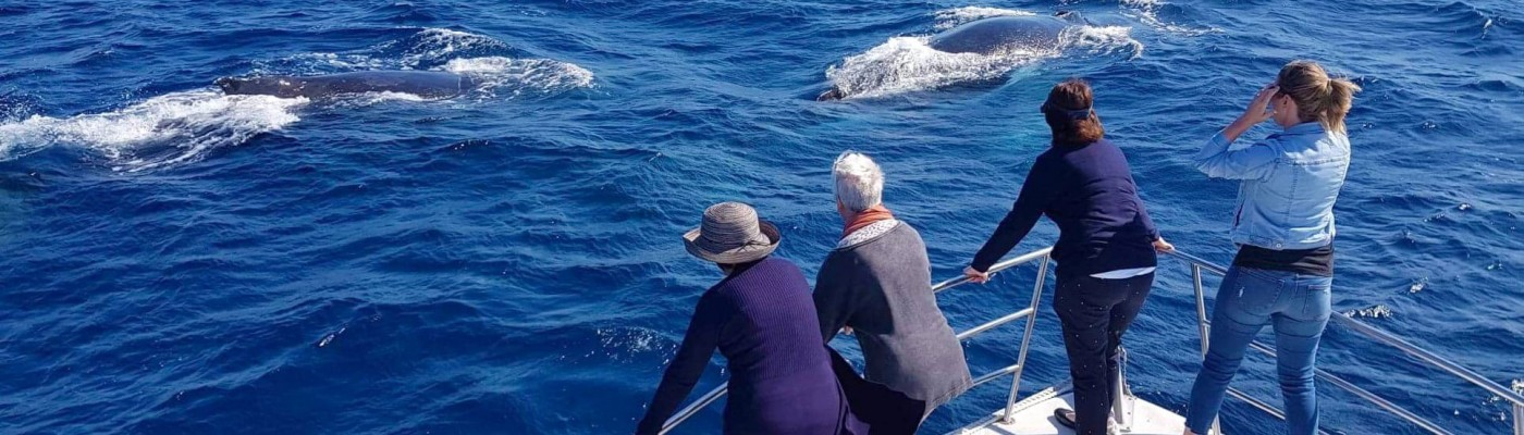 Whale Watching without crowds