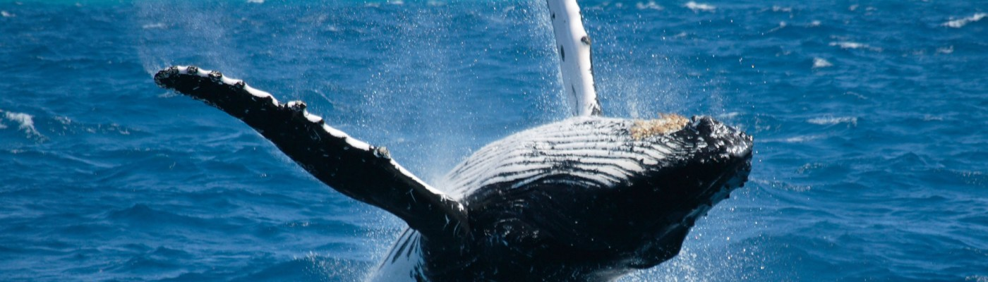 Best Whale Watching Tours Jervis Bay